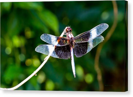 Dragonfly 0002 Canvas Print by Barry Jones