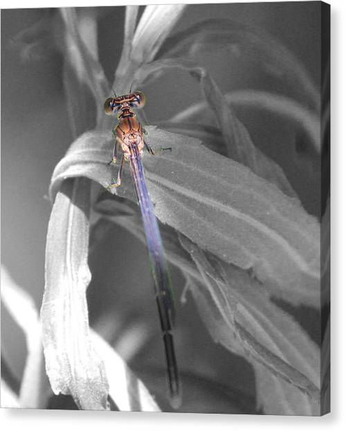 Dragonfly Bw With Color Canvas Print