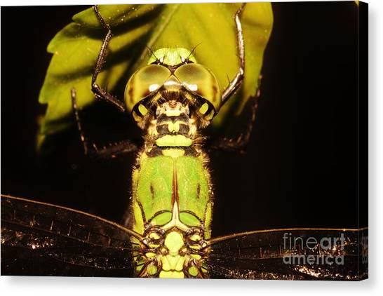 Dragonfly Closeup Canvas Print by Lynda Dawson-Youngclaus