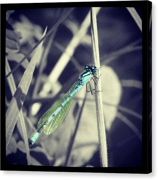 Dragons Canvas Print - Dragonfly. #dragonfly #blackandwhite by Phil De Montjoie Heard
