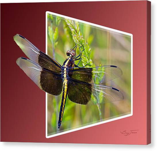 Dragonfly Holding On Canvas Print by Barry Jones