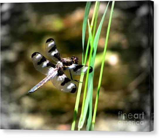 Dragonfly Canvas Print by Irina Hays