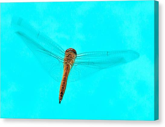 Dragonfly Canvas Print by Miguel Capelo