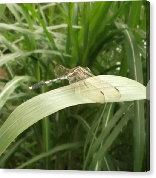 Liquor Canvas Print - Dragonfly #nature #animal #macro #green by Gin Zhao Yun
