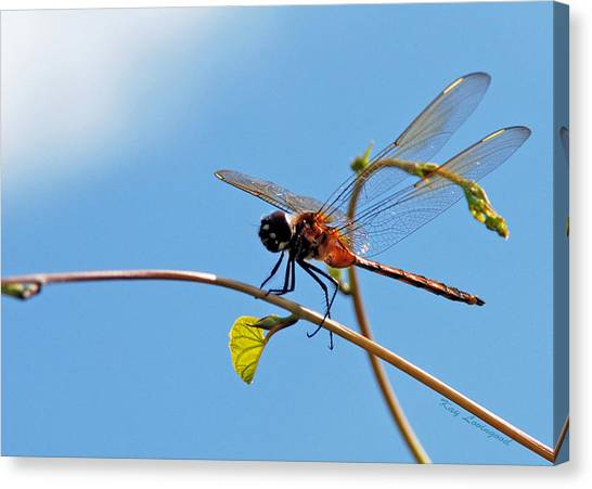 Dragonfly On A Vine Canvas Print