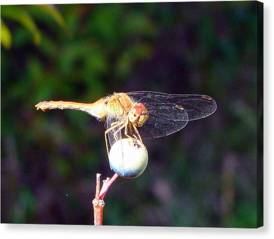 Dragonfly On Sphere Canvas Print by Mark Haley