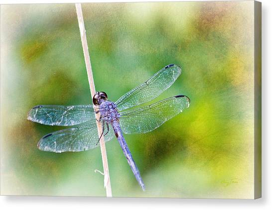 Dragonfly Respite 001 Canvas Print by Barry Jones