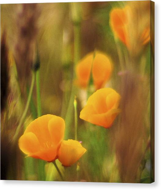 Dream Poppies Canvas Print