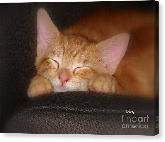 Dreaming Kitten Canvas Print