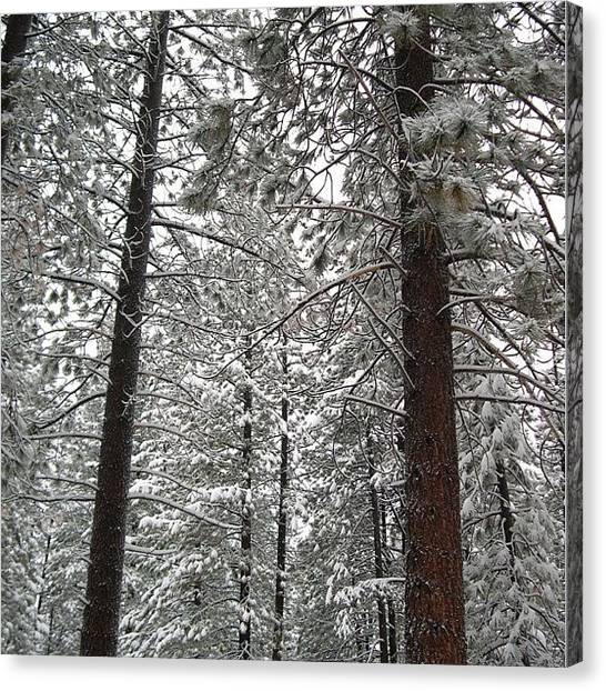 Thanksgiving Canvas Print - Dreaming Of Winters Past. #tahoe by Aubrey Erickson