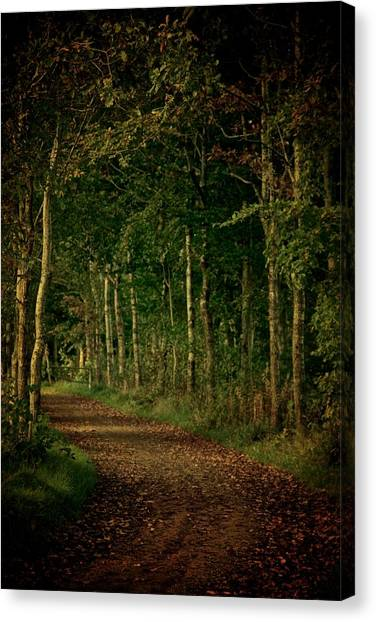 Forest Paths Canvas Print - Dress Me In Autumn by Odd Jeppesen