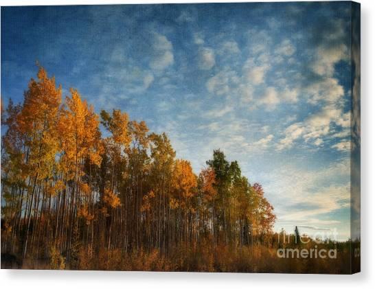 Treeline Canvas Print - Dressed In Autumn Colors by Priska Wettstein