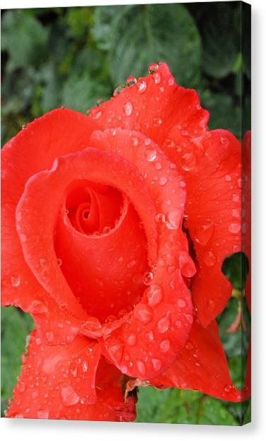 Dressed In Red Canvas Print by