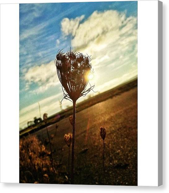 Tractors Canvas Print - Dried Out But Beautiful by Melanie Stork