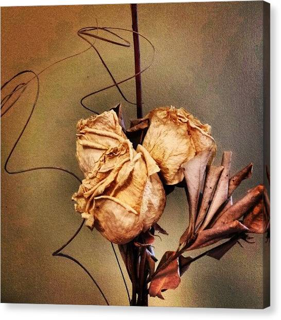 Wedding Canvas Print - Dried Roses. (from My Wedding Bouquet) by Jess Gowan