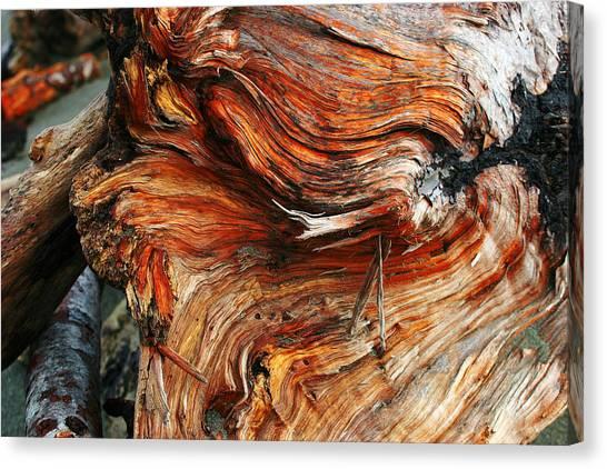 Drift Redwood Canvas Print
