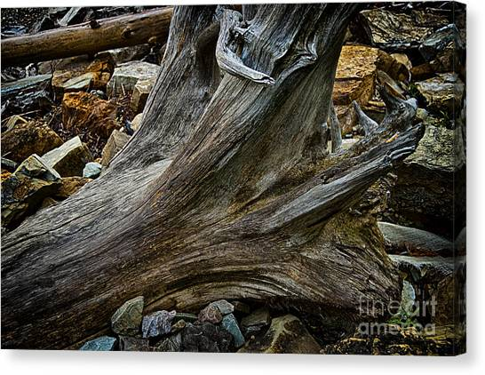 Drift Wood One Canvas Print by Rick Bragan