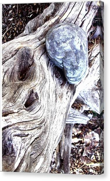 Driftwood Canvas Print by Suzanne Fenster