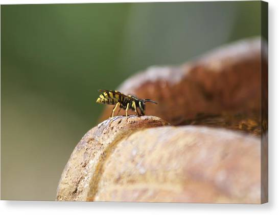 Drinking Bee Canvas Print
