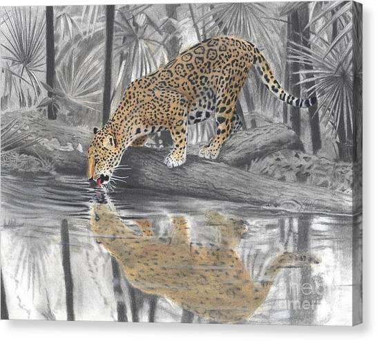 Drinking Jaguar Canvas Print