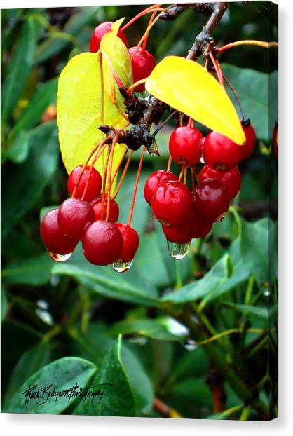 Drips And Berries Canvas Print by Ruth Bodycott