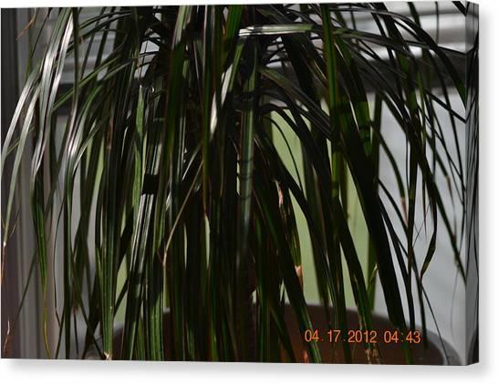 Drooping Tree Leaves Canvas Print by Heidi Frye