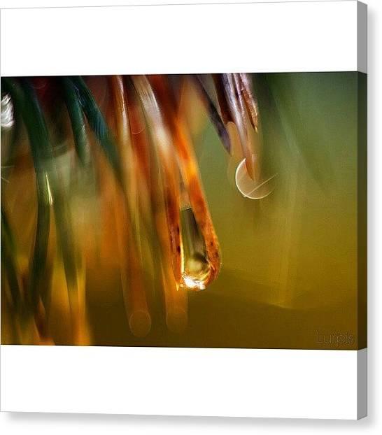 Drops Canvas Print - Drop II || Lurpis @ Kik #iphonesia by Robin Hedberg