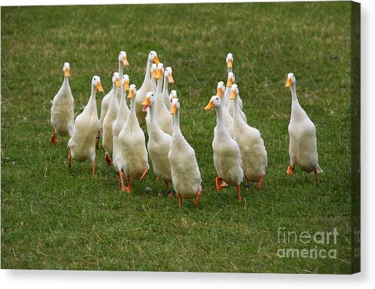 Duck Charge Canvas Print