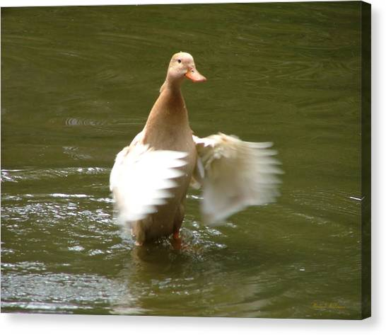 Duck Flapper Canvas Print