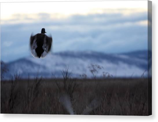 Duck Silhouette - 0001 Canvas Print