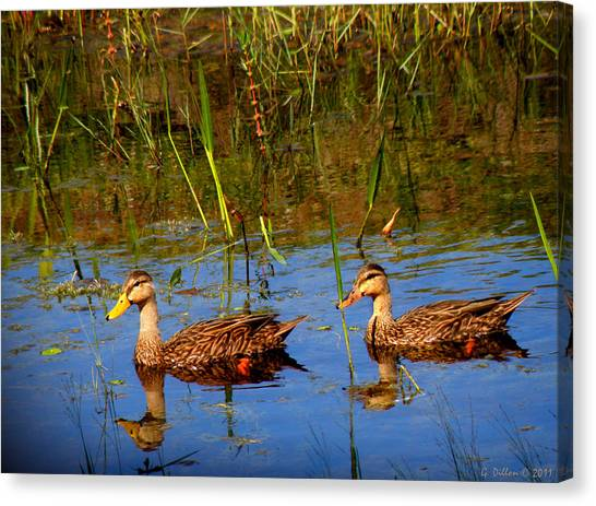 Ducks Afloat Canvas Print