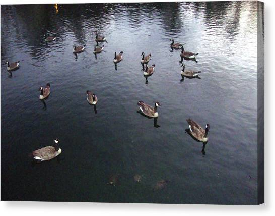 Ducks At Sunset Canvas Print