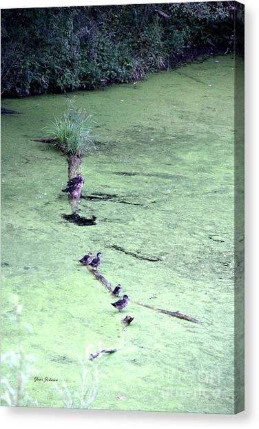 Ducks On The Log Canvas Print by Yumi Johnson