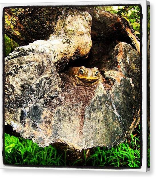 Frogs Canvas Print - During #philippine #vacation #frog by Zyrus Zarate