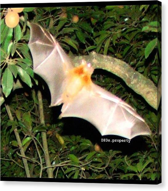 Bat Canvas Print - During #philippines #vacation #nofilter by Zyrus Zarate