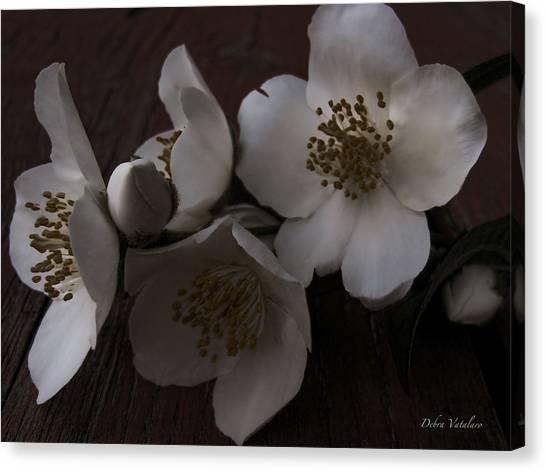 Dusk Blooms Canvas Print by Debra     Vatalaro