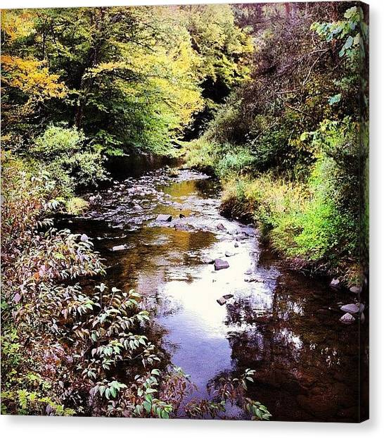 Trout Canvas Print - Dyberry Creek by Dave M