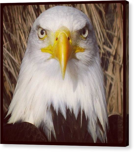 Hunting Canvas Print - Eagle Stare by Tony Benecke