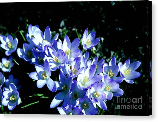 Early Blooms Canvas Print by Rick Bragan