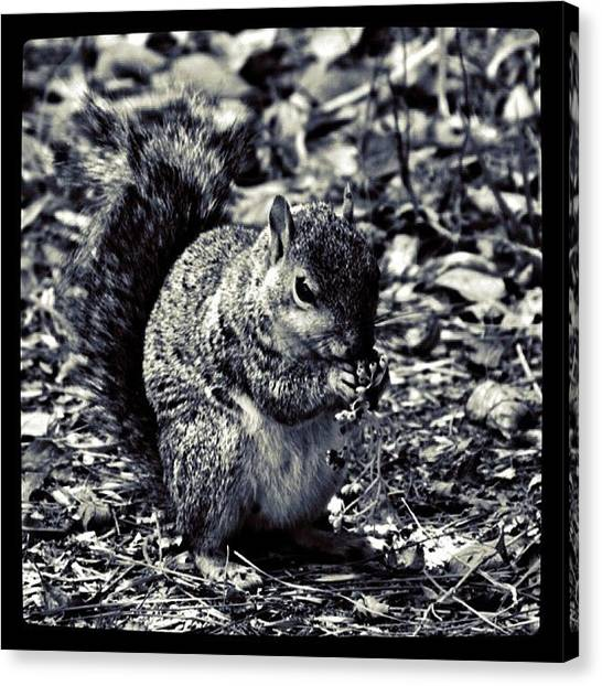 Squirrels Canvas Print - Early Winter Prep by S Michelle Reese