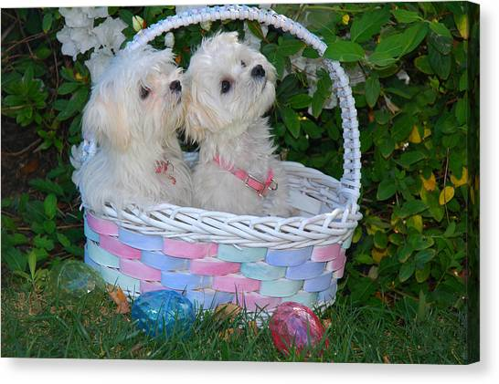 Easter Baskets Canvas Print - Easter Pups by Lynn Bauer