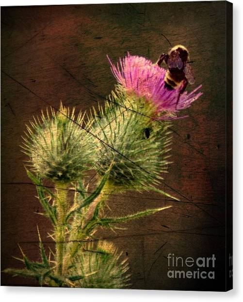 Easy Stepping Canvas Print by David Taylor