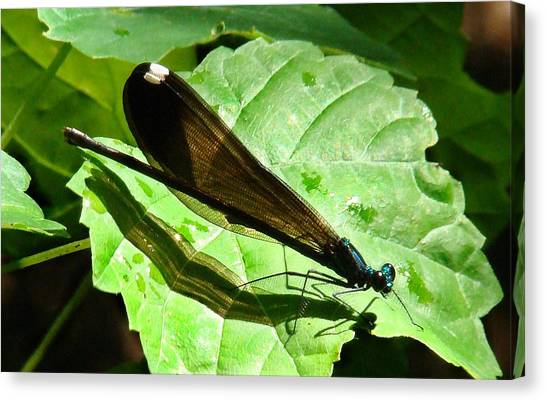 Ebony Jewelwing Damselfly II Canvas Print by Bruce W Krucke