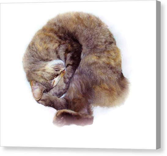 Manx Cats Canvas Print - Eclipse Napping by Kathleen Horner