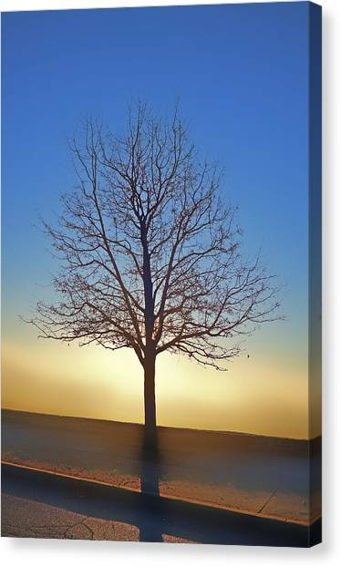 Eden Tree Canvas Print
