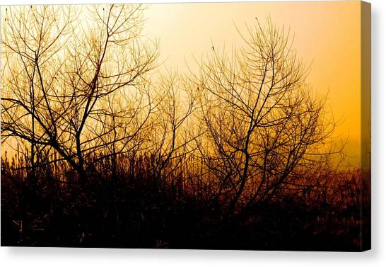 Eerie Dawn Canvas Print