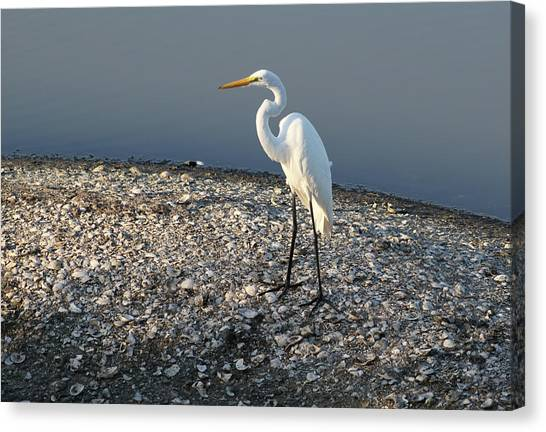 Egret At Huntington Canvas Print