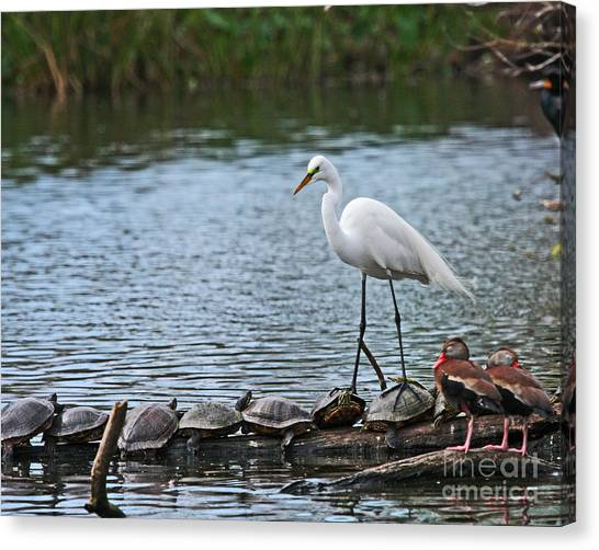 Egret Bird - Supporting Friends Canvas Print