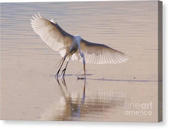 Egret Hunting Canvas Print