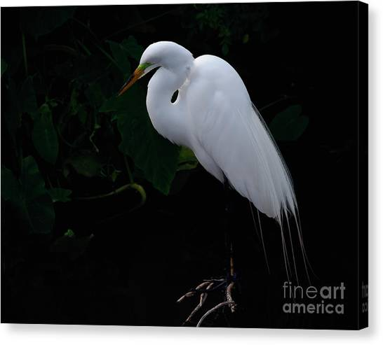 Egret On A Branch Canvas Print